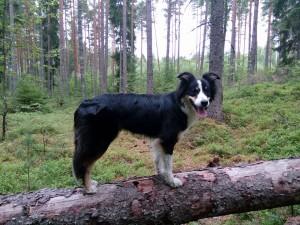 wiksu 25.7.17 seisomakuva metsässä